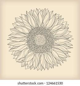 flower vintage card - sunflower drawn