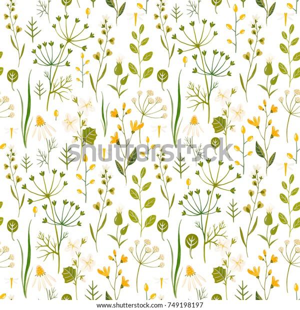 Flower Watercolor Pattern Simple Wildflowers Plants Stock