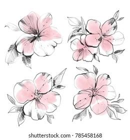Flower watercolor sketch. Botanical art illustration