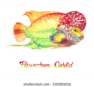 Flowerhorn cichlid fish (Elvis strain), hand painted watercolor  illustration with handwritten inscription
