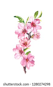 Flowering branch with pink flowers. Cherry blossom. Watercolor spring time