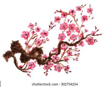 Flowering branch of sakura. Isolated on white background