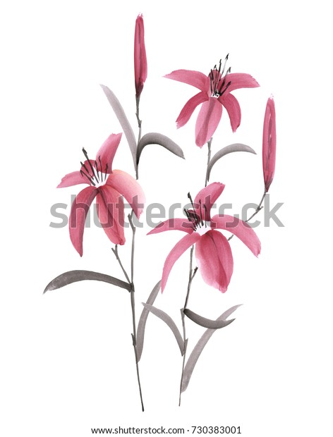 Flowering lily with dark pink flowers. Isolated. Watercolor