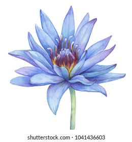 Blue Lotus Images Stock Photos Vectors Shutterstock