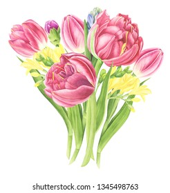 Flowers bouquet with tulips, watercolor painting. For design cards, pattern and textile.