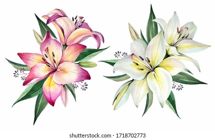 Flowers bouquets. Watercolor illustration. Lily