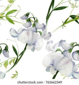 Flowers, buds, branches of sweet pea. Decorative composition. Watercolor. Floral motifs. Seamless pattern. Use printed materials, signs, items, websites, maps, posters.