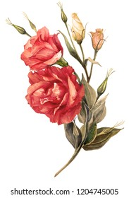 Flowers, buds and leaves -  watercolor.  Red vintage eustomas.  Use printed materials,  signs, posters, postcards, packaging.