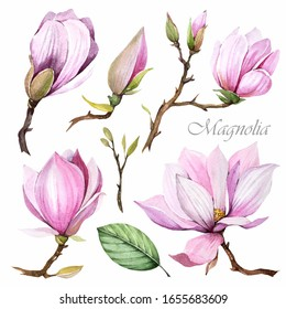 Flowers collection. Magnolia set on white background. Spring clip art