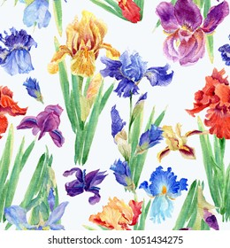 Flowers of Iris. Watercolor hand drawn botanical illustration of flowers. Seamless pattern.
