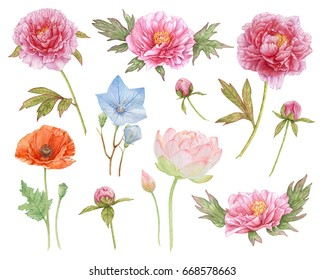 Flowers isolated on white background. Watercolor flowers.