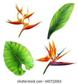 Flowers and leaves of Oceania (Heliconia Bihai, greenery and Strelitzia)