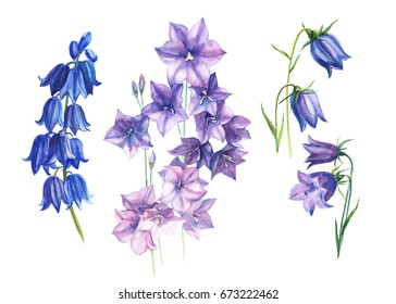 Flowers Purple bells, buds and leaves. Set watercolor, hand drawing