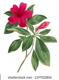Flowers ready to used for digital print everyone can use for textile digital print and making design layout. download and direct print on digital printing machine.