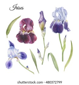 Flowers set of hand drawn watercolor iris and leaves
