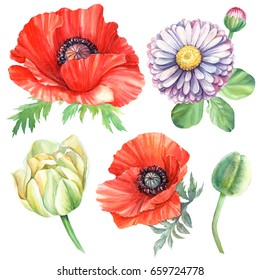 Flowers set. Red poppies, Pink daisy, Yellow tulip watercolor.