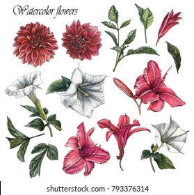 Flowers set of watercolor dahlias, lilies, datura flowers and leaves