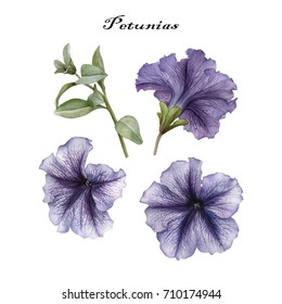 Flowers set of watercolor petunias and leaves