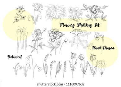 Flowers Sketches. Hand drawn botanical elements. Iris,  lilies,  peony, tulips,  pansy and rose.  Illustration