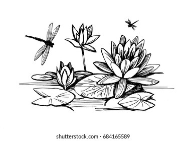 Flowers of water lilies and leaves on the water surface. Dragonflies fly over plants  sketch.