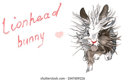 Fluffy lion-head bunny running towards the viewer, its grey and brown fir flying on the wind, with hand drawn title and a pink heart.