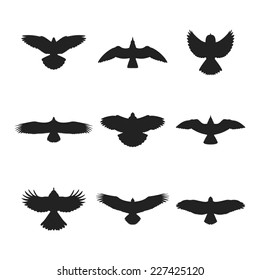 Flying bird like eagle sparrow dove pigeon sea gull or hawk silhouettes set