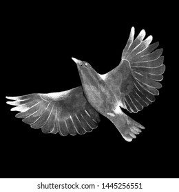 Flying bird on black background. Watercolor hand drawn illustration.