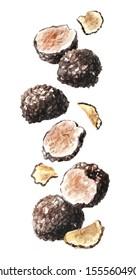 Flying black truffle mushrooms. Watercolor hand drawn illustration  isolated on white background