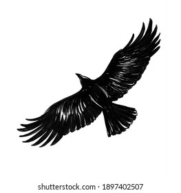 Flying crow bird. Ink black and white drawing