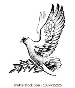 Flying dove with olive branch. ink black and white drawing