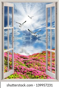 Flying over the rose field to the sea gulls, the view from the window