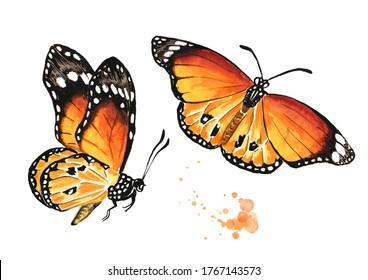 Des papillons d'été volants se dressent. Illustration à l'aquarelle dessinée à la main isolée sur fond blanc