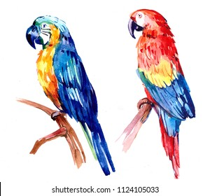 Flying tropical parrot Ara. Watercolor hand drawn illustration