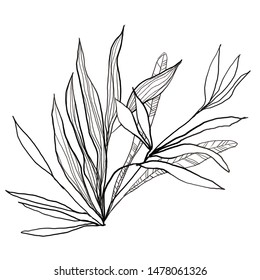 Foliage line art sketch drawing in artsy style