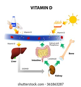 Foods contain vitamin D. Skin absorbs solar UVB radiation and synthesis of vitamin D. Calcium homeostasis and metabolism.