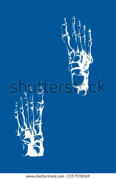 Foot Bones Illustration Pattern T Shirt Stock Illustration 1317938369