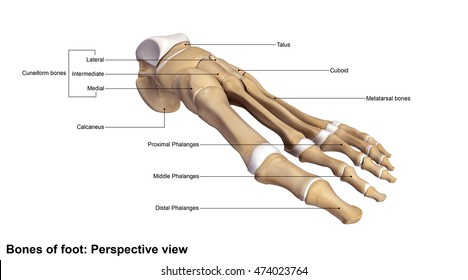 Foot Perspective view 3d illustration