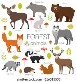 Forest animals isolated set. Moose, wild boar, bear, fox, rabbit, wolf, skunk, raccoon, deer, squirrel, hedgehog illustration