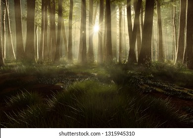 Forest Clearing at sunset (3D Rendering)