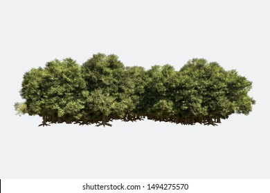 Forest isolated. Image useful for banners, posters or photo maipulations. 3d rendering. Illustration