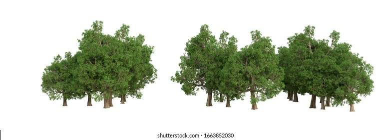 Forest isolated. Image useful for banners and posters or photo manipulations. 3d rendering - illustration