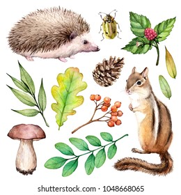 Forest life watercolor set. Illustration on white background with hedgehogs, chipmunk, beetle, mushroom and leaves.