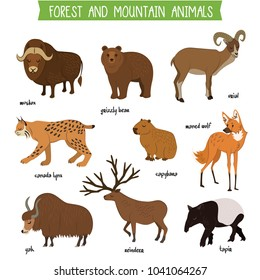 Forest and mountain animals set isolated illustration. Muskox, grizzly bear, urial, lynx, capybara, wolf, tapir, reindeer, yak in cartoon style. Forest and mountain wildlife animals collection