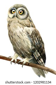 forest owl watercolor illustration, hand drawing, a collection of elements on an isolated white background