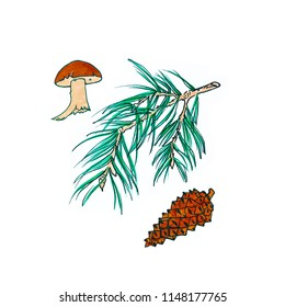 Forest stuff - a branch of pine, cones and mushrooms separately on a white background