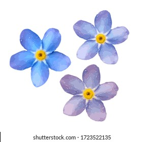 Forget me not flower isolated on white background. Blue and pink bloom. Illustration.
