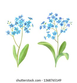 Forget me not flowers watercolor set. Small blue wild flowers, leaves. Isolated on white background