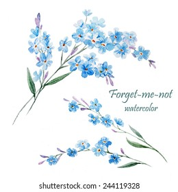 forget-me, watercolor, flower