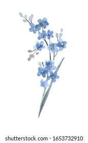 Forget-me-not flower. Cute watercolor illustration isolated on white background. Spring design.