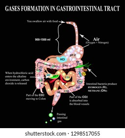 Formation of gases in the gastrointestinal tract. Esophagus, stomach, duodenum, small intestine, colon. Carbon dioxide, methone. Flatulence. Infographics. illustration on black background.